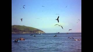 Voar é com os Pássaros. Gaivotas na Praia de Itaipu Niterói. Março de 2011