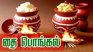Pongal Documentary in Tamil || Pongal Festival Celebration || பொங்கல்