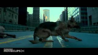 I Am Legend 5 10 Movie CLIP   Infected Dogs 2007 HD