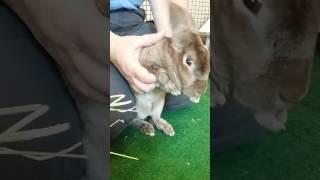 Animals Talk on The Talk of San Diego