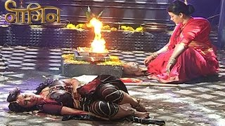 Naagin 1st January 2016 EPISODE | Shesha DEAD – SHOCKING