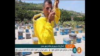 Iran New Honey Bee race, Gorgan county پرورش نژاد جديد زنبور عسل شهرستان گرگان ايران
