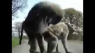 Funniest Monkey Sex Video!  A Must See!