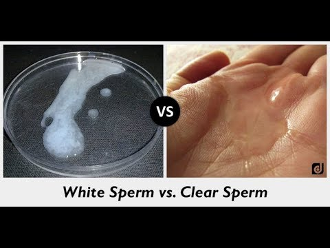 Xxx Mp4 Difference Between White And Clear Sperm 3gp Sex