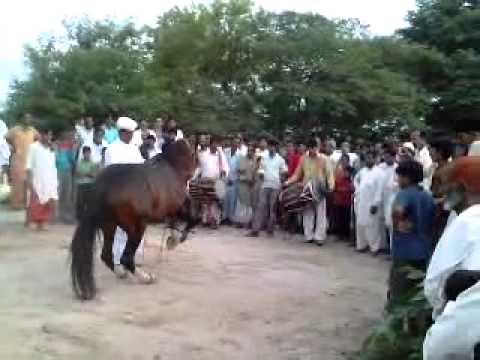 Xxx Mp4 Horse Dance In Sialkot Pakistan 3gp 3gp Sex