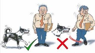 كيف تنجو ان هاجمك اى كلب حتى ولو كان مفترس