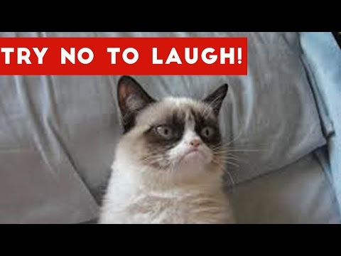 Try Not To Laugh At This Funny Cat Video Compilation | Funny Pet Videos