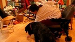 Barnum, 2 yr old bouvier SDiT - retrieve training - blooper reel - overenthusiastic issue