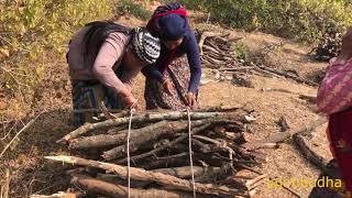 villagers carry the wood || village life || himalayan life style ||