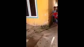 Hewan Kelabang Seribu Dimusnahkan Anak Anak