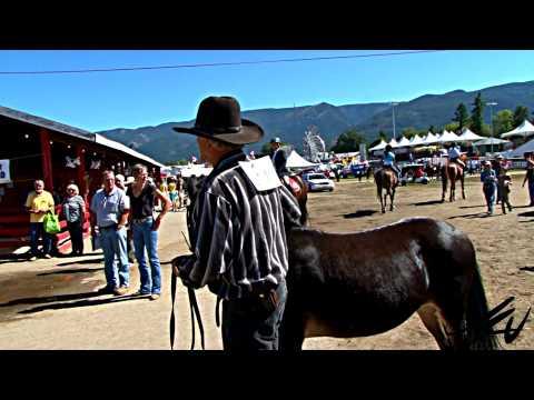 mules & donkey's at the fall fair