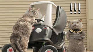 Aaron's Animals Best Funny Video Compilation || FunnyVines