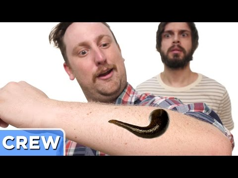 The Blood Sucking Leech Adventure