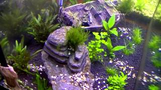 Timelapse video of a planted aquarium - 15 days in 2 minutes