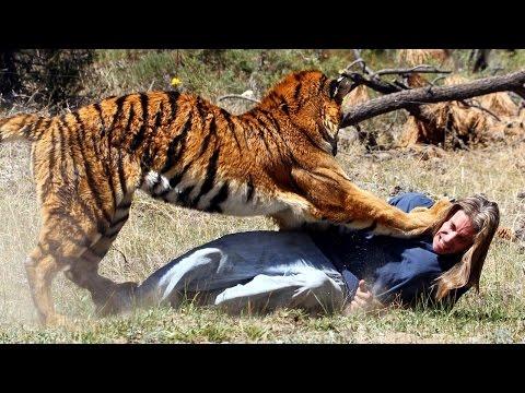 Ataques de Animais Cenas Fortes a pessoas