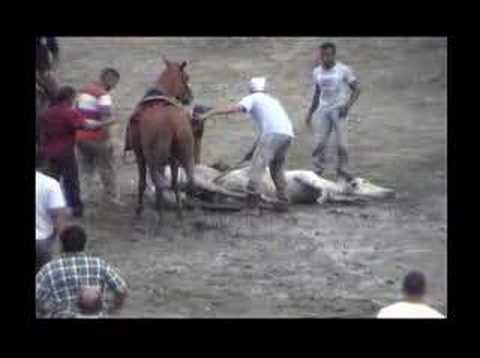 coleo de toros 3