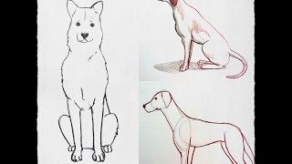 Dibujo de un perro a lpiz  Cmo dibujar animales  valavideocom