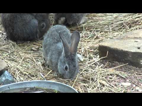 Зайцы кролики 03.05.11