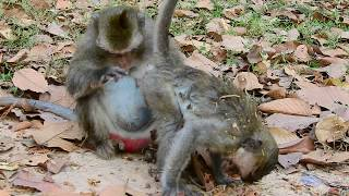 Time to clean baby skin, Mom massage for her baby, Lovely mom monkey