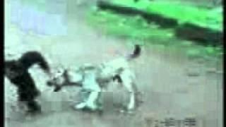 punjabi funny video (8).3gp