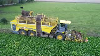 Ropa Tiger 6, Sugar Beet Harvesting, Lincolnshire UK.