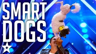BEST DOG Performance | Pompeyo Family Dogs on America