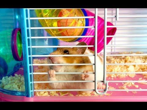 Xxx Mp4 NUEVA CASA PARA NUESTRO HAMSTER 🐹 Hamster Escapista 🐹 Regalo De Navidad 3gp Sex