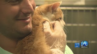 Clear The Shelters helps find homes for thousands of animals