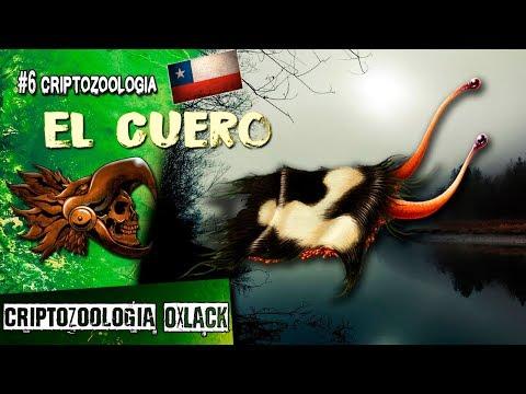 👾 EN CHILE EXISTE UNA EXTRAÑA CRIATURA OCULTA OxlackCastro