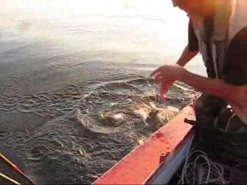 ловля сома на квок на десне видео