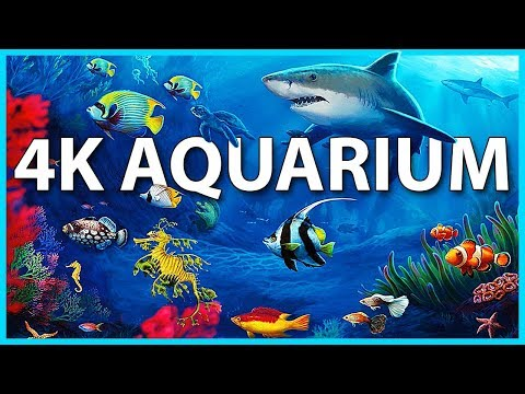 The Best 4K Aquarium for Relaxation 🐠 Sleep Relax Meditation Music 2 hours 4K UHD Screensaver