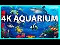 The Best 4K Aquarium for Relaxation 🐠 Sleep Relax Meditation Music - 2 hours - 4K UHD Screensaver