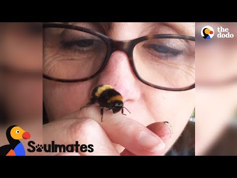 Xxx Mp4 Bee And Woman Become Best Friends After Garden Rescue The Dodo Soulmates 3gp Sex