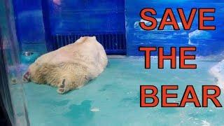 Polar Bear : People Are Trying To Save The 'World's Saddest Polar Bear