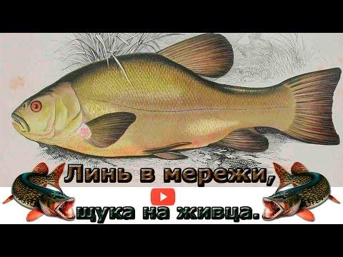 рыбалка верши линь