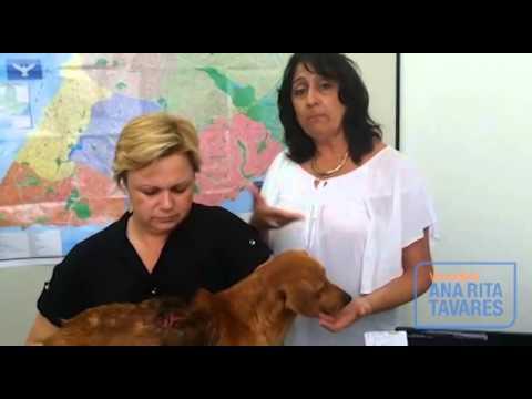 Animal com miíase é resgatado por vereadora em rua de Salvador