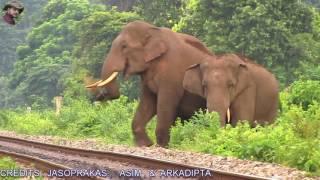 Full Story Of 4 Tusker Elephants Crossing Railway Track.
