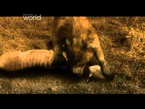 Prehistoryczne B Niedźwiedziopies 4 Część 2