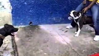 Dog street fights