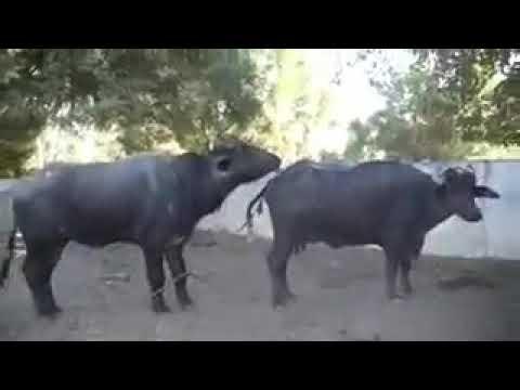 Xxx Mp4 Xxx Sits Ram Raj 3gp Sex
