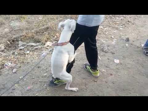 Xxx Mp4 Dog Fuck To Man 3gp Sex