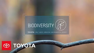 Toyota Environmental Sustainability Presents: Home Is For The Birds | Toyota