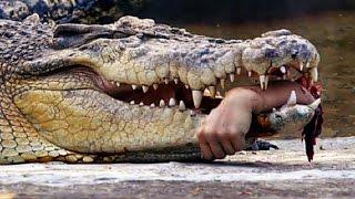 Top 10 : Ataque de Animais em Humanos