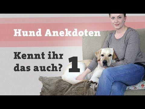 Kennt ihr das Teil 1 - Lustige Geschichten und Anekdoten rund um den Hund