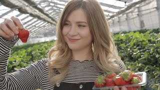 A Day on a Japanese Strawberry Farm