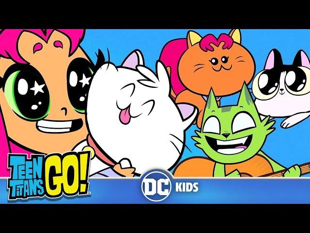 Teen Titans Go! | A Funny Cat Video