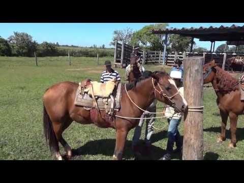Noelzinho Montando no Cavalo Chucro Guapos da Fronteira