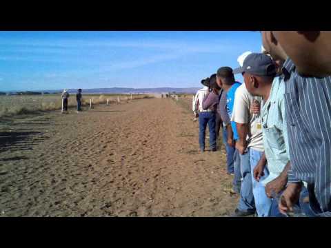 Carreras de caballos en Washington