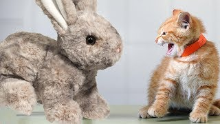 So Funny When Cats Meeting Stuffed Compilation, Try Not To Laugh Cats Videos, Animals TV