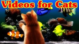 Videos for Cats to Watch - FISH video for Cats